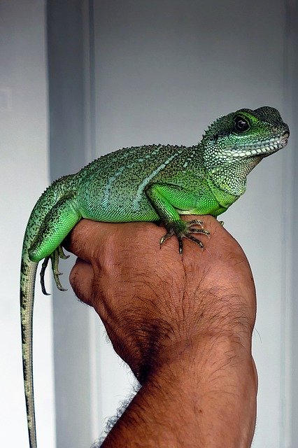 whats on thatcham, reptile handling, free events for kids newbury, free events for kids berkshire