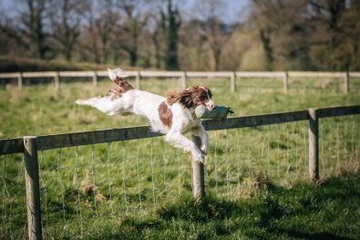 CheshireGundogs-156
