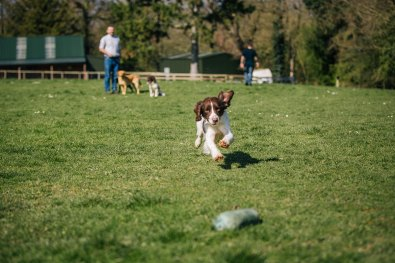 CheshireGundogs-161