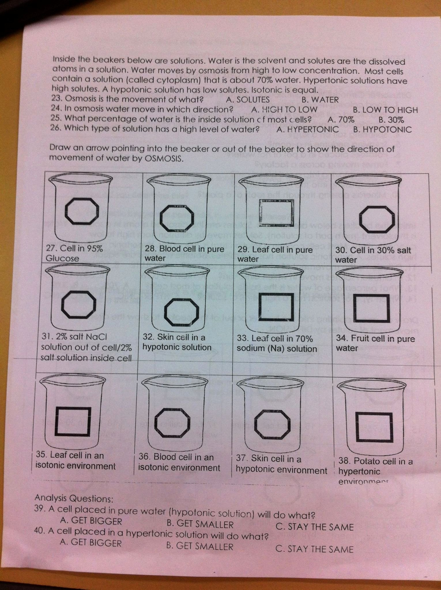 50 Active And Passive Transport Worksheet
