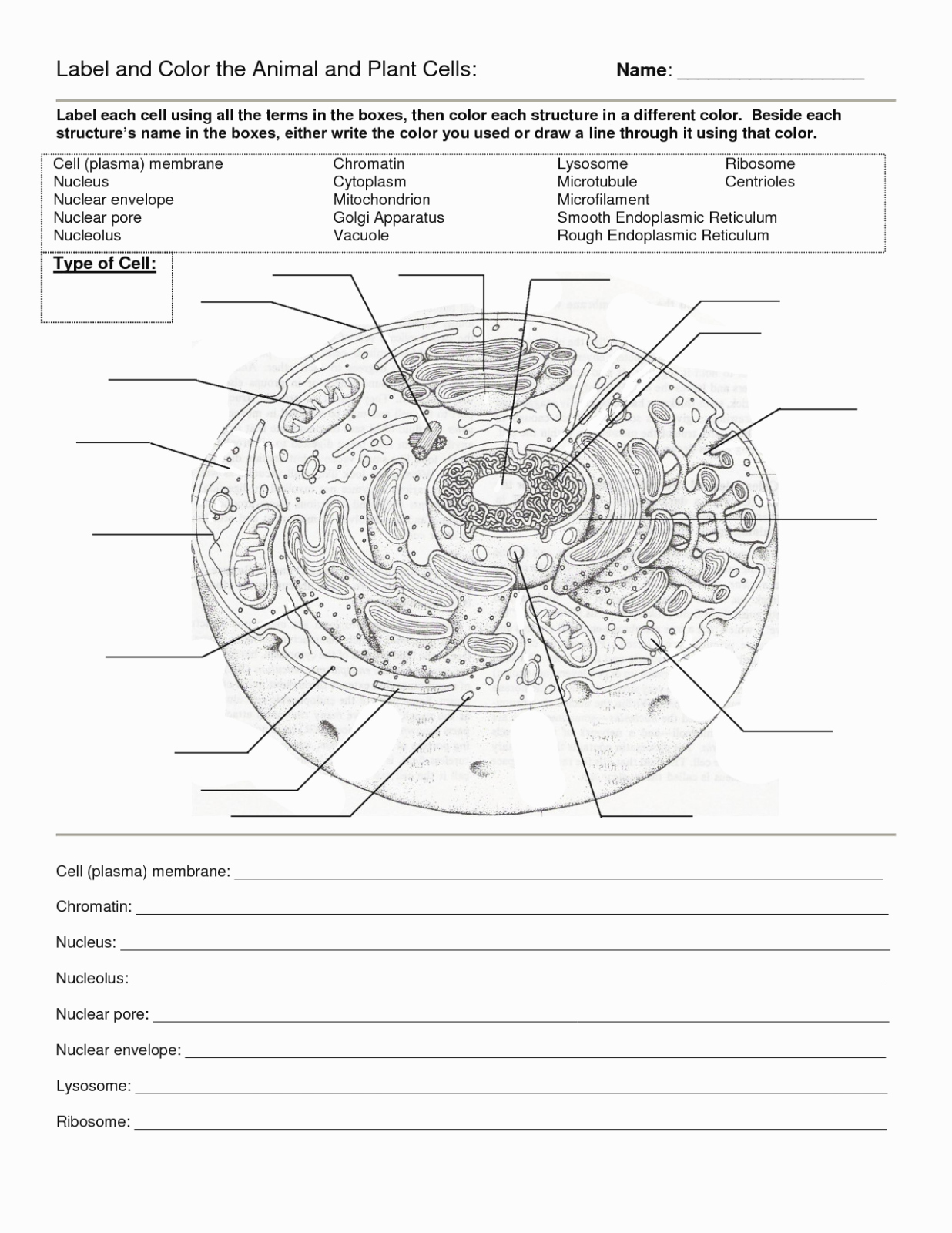 50 Animal Cell Worksheet Answers