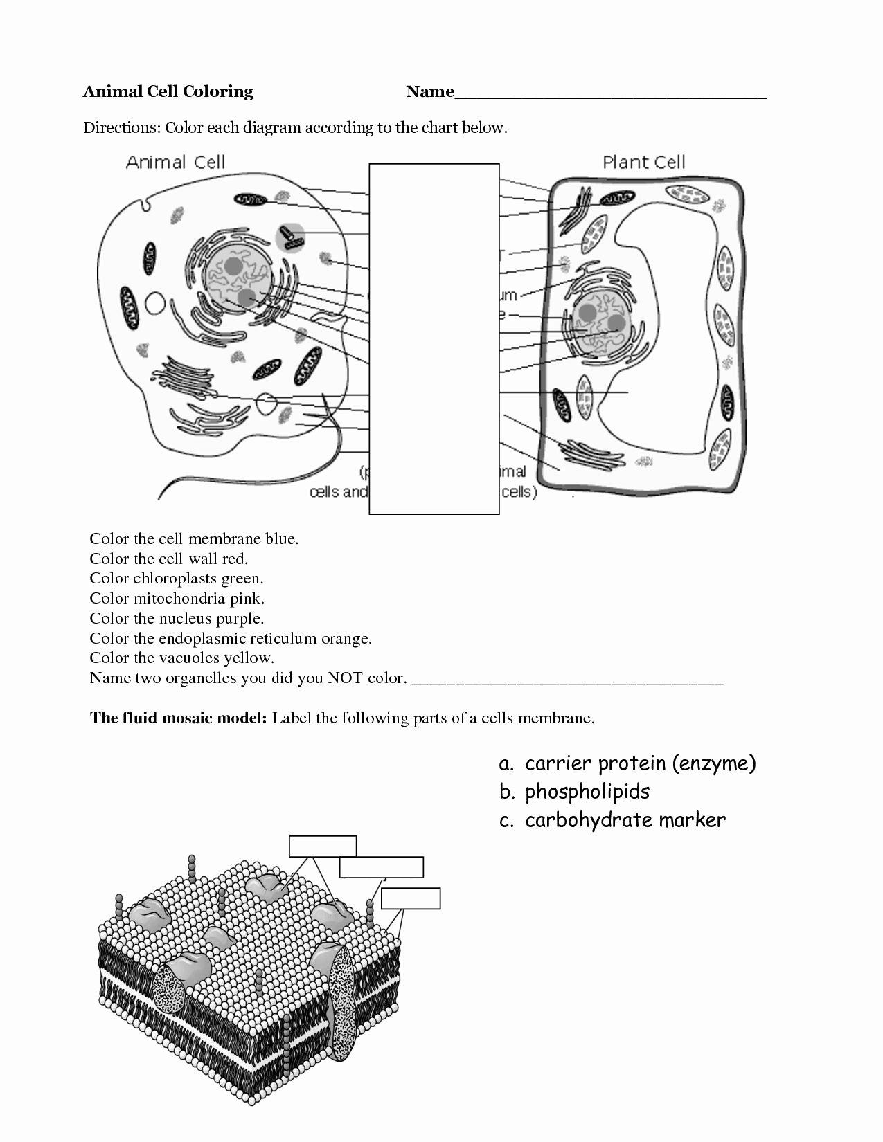 49 Animal Cells Coloring Worksheet