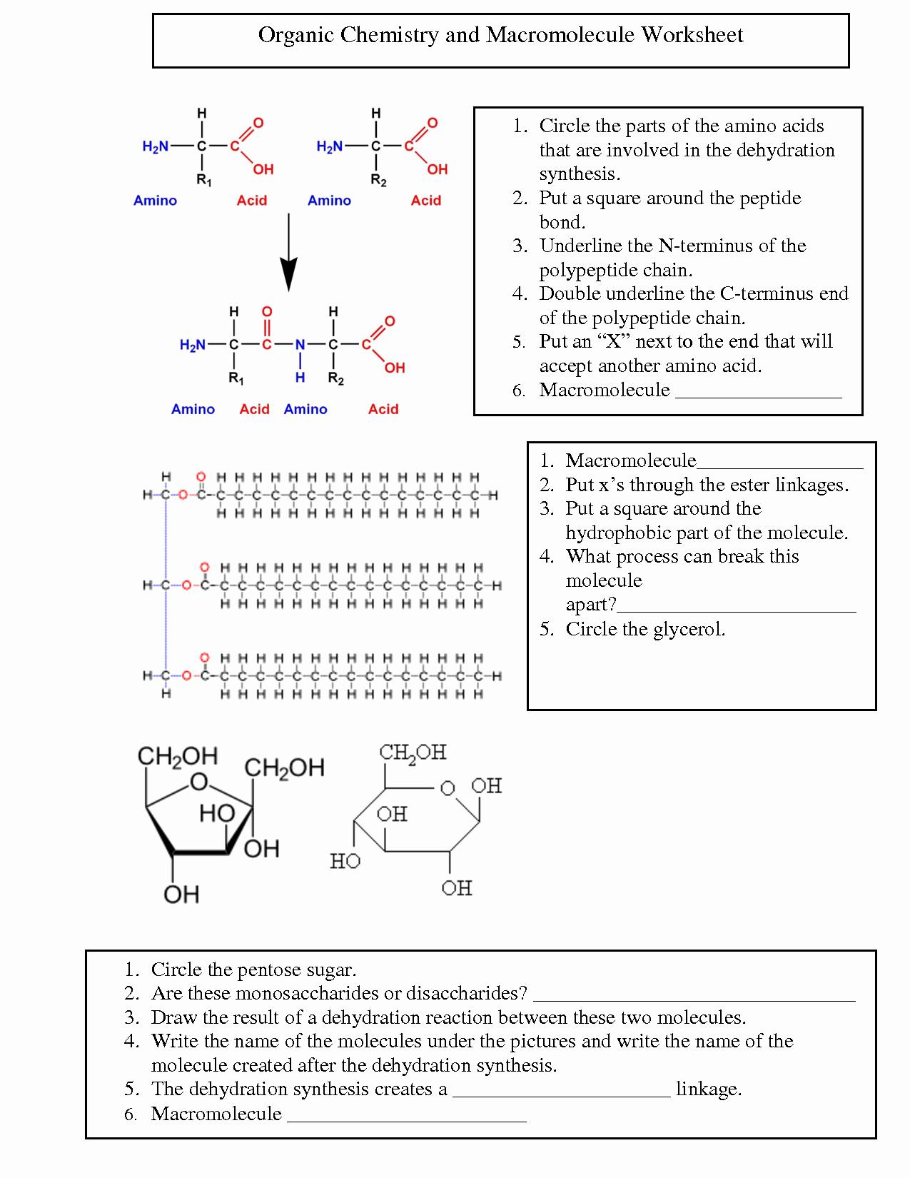 50 Biological Molecules Worksheet Answers