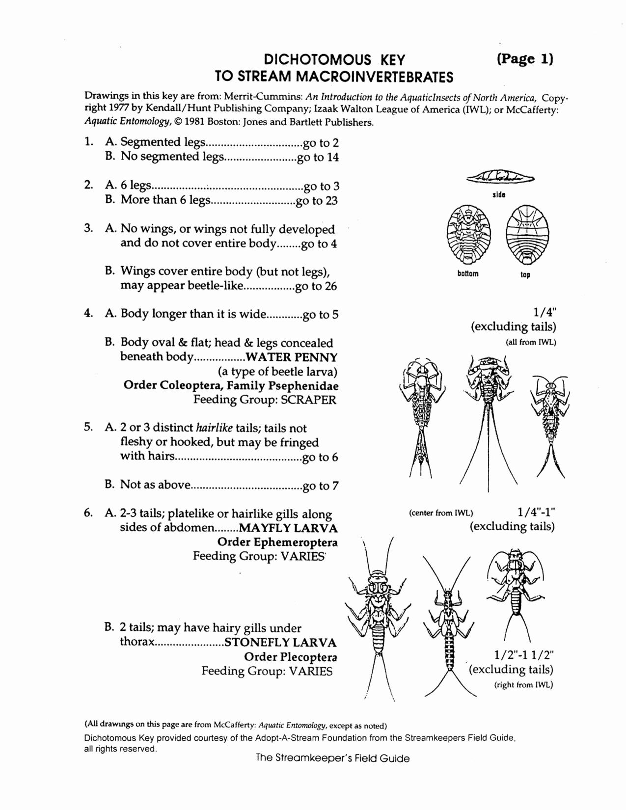 50 Dichotomous Key Worksheet Middle School