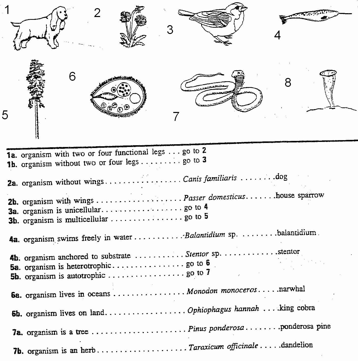 50 Dichotomous Key Worksheet