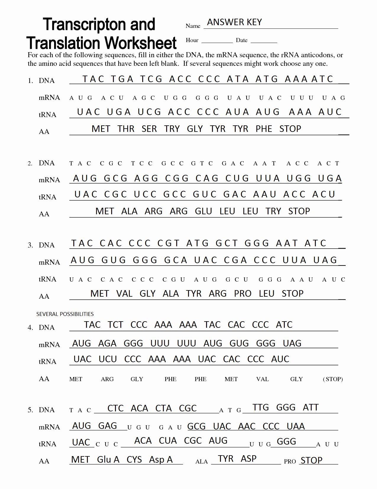 50 Dna Transcription And Translation Worksheet