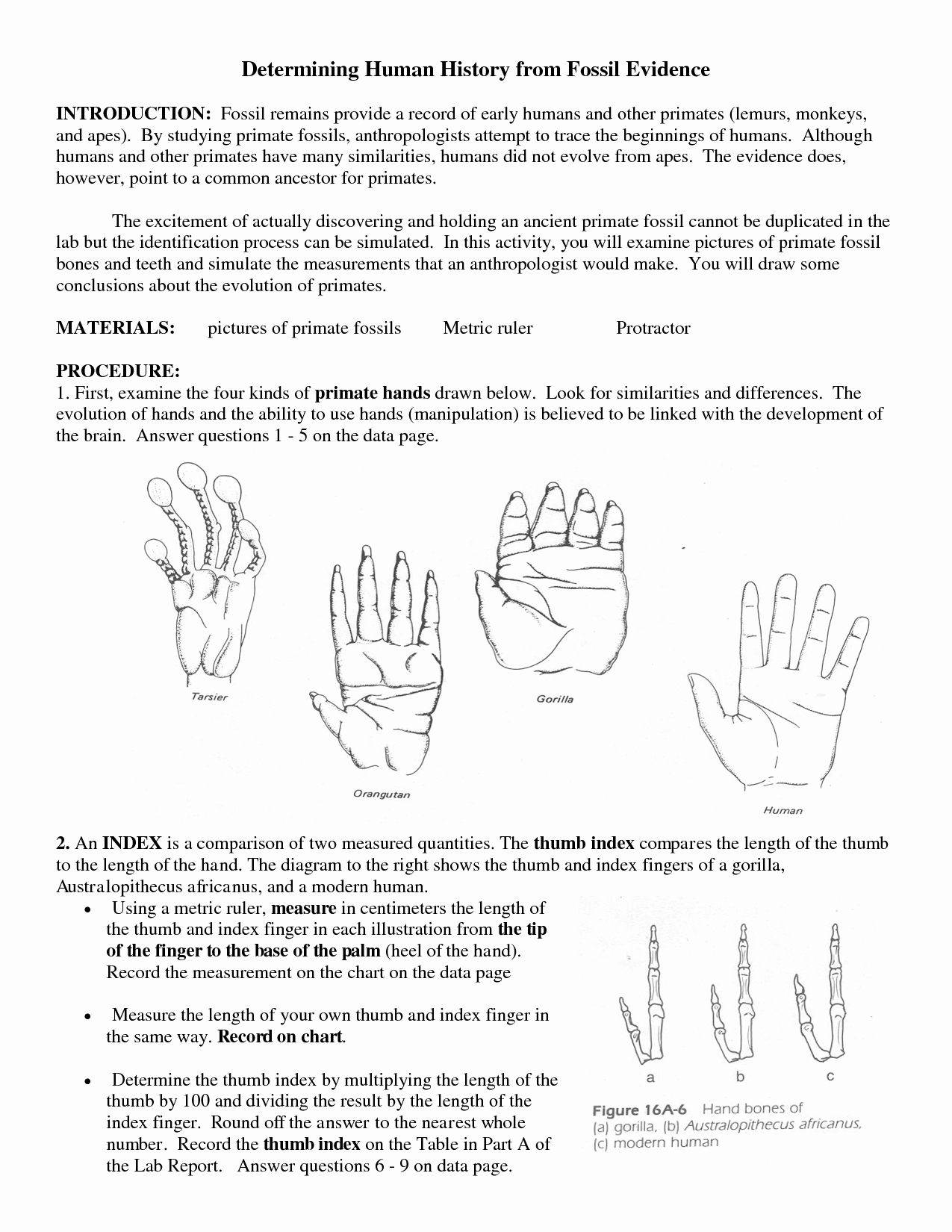 50 Evidence Of Evolution Worksheet Answers