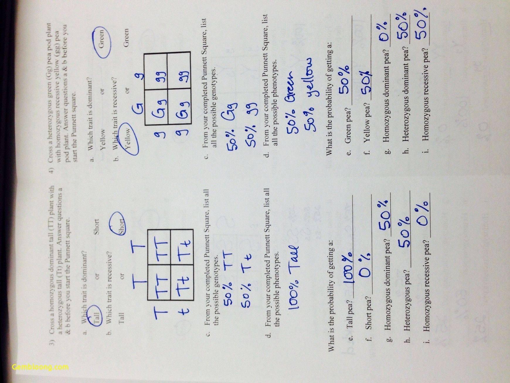 50 Genetics Worksheet Answers Key