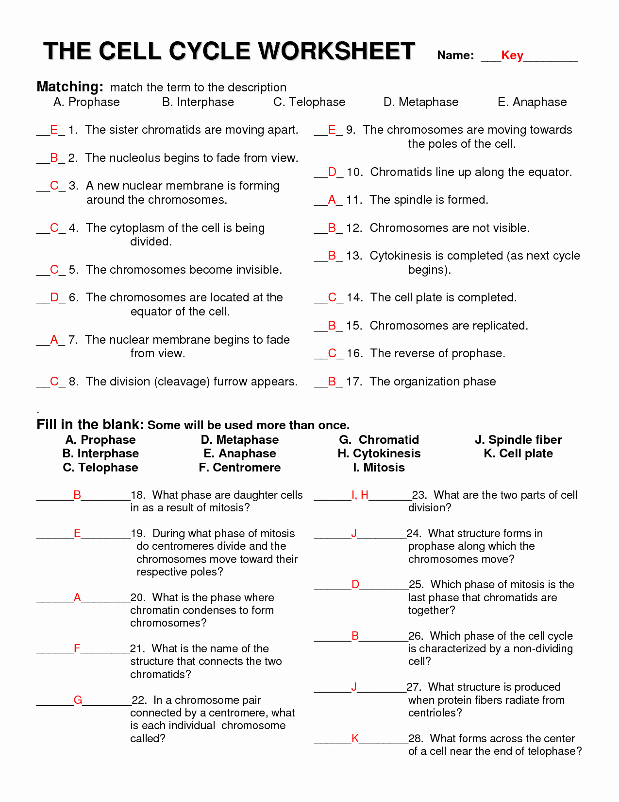 50 Meiosis Matching Worksheet Answer Key