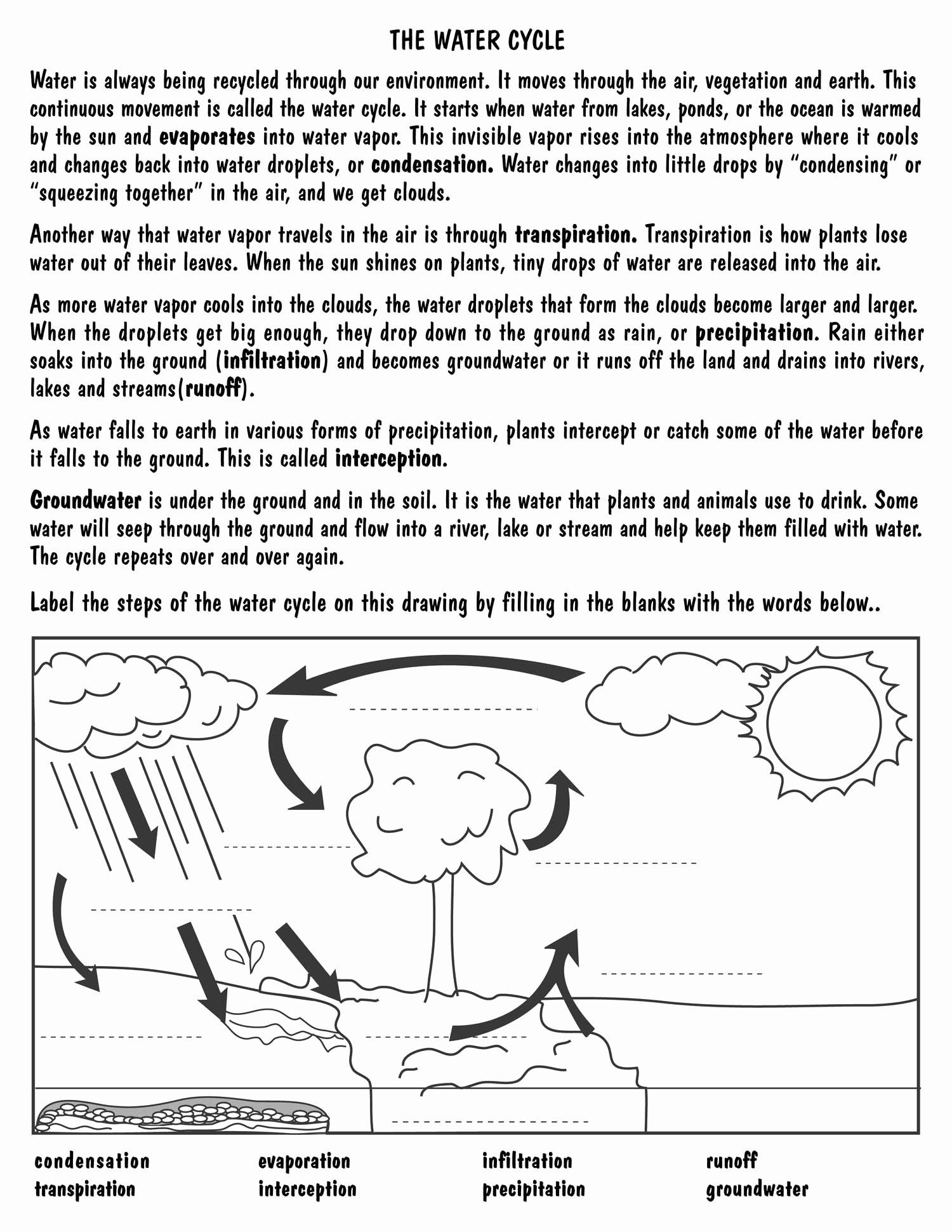 50 Water Cycle Worksheet