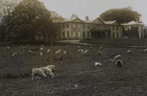 Rural Buckland