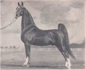 ASB stallion Sensation Rex was owned by Crebilly Farms in Pennsylvania during the 1940's (from Pinterest)