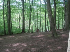 The West Wood