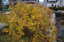 cove-garden-nov-17th-imgp4131