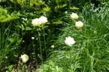 june-18th-tangled-garden-imgp2409