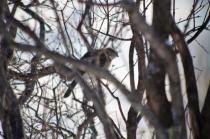 A Sharp Shinned Hawk on watch