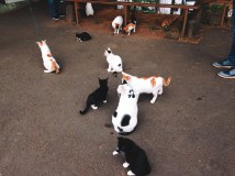 Tubby cats at Kimnyoung Maze Park