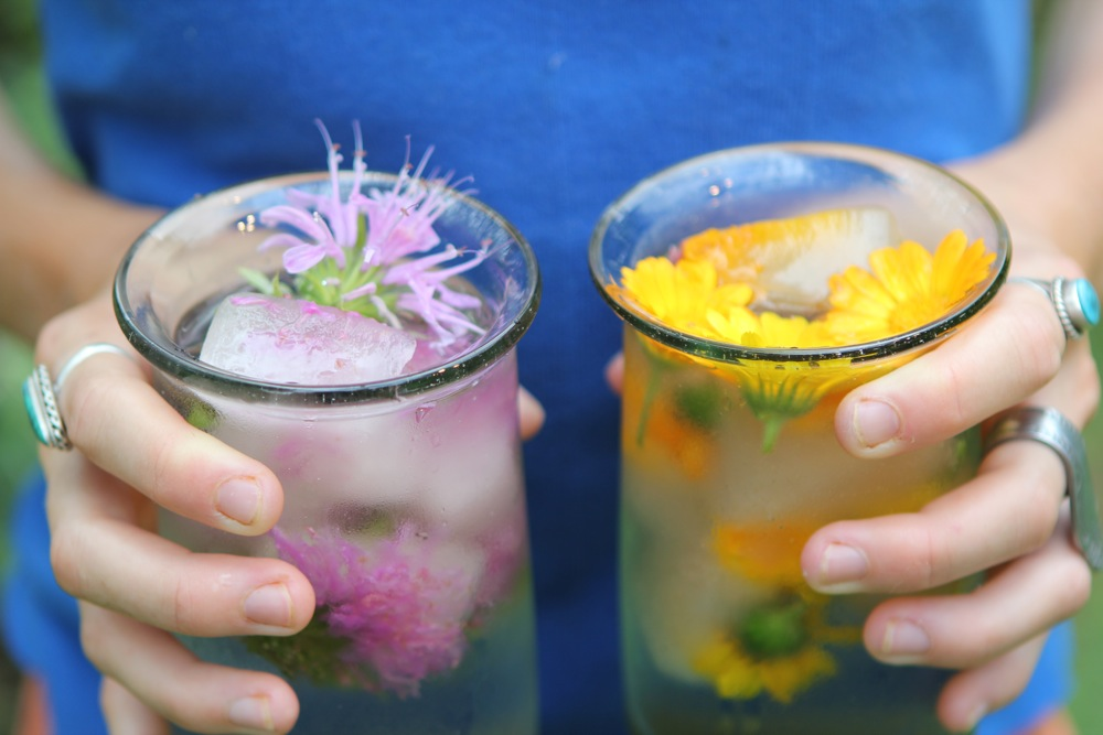 Image result for edible flower ice cube drink