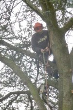 2-Dan in tree