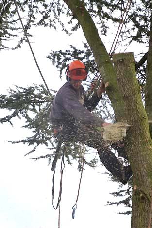 8-Sawing branch