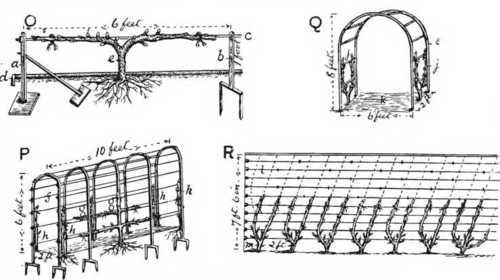 https://i2.wp.com/chestofbooks.com/gardening-horticulture/fruit/Pictorial-Practical-Fruit-Growing/images/horizontal-upright-cordons-espaliers.jpg