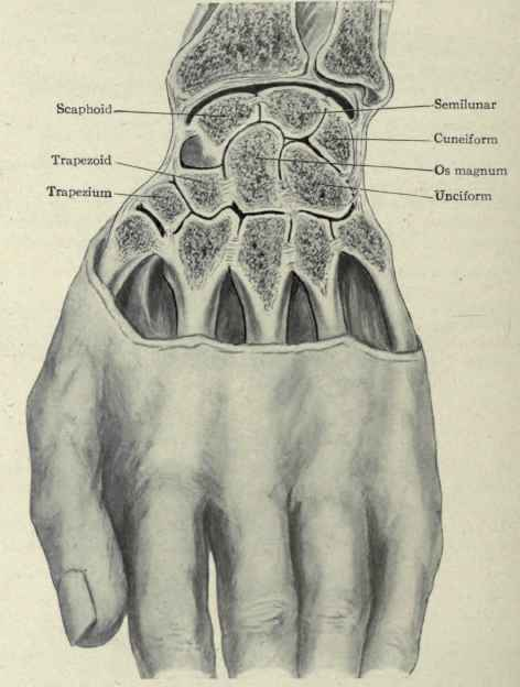 Ligaments & tendons