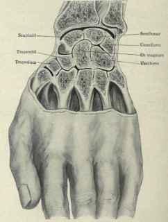 Inestabilidad de la muñeca osteon alaquas carlos lopez cubas fisioterapia valencia