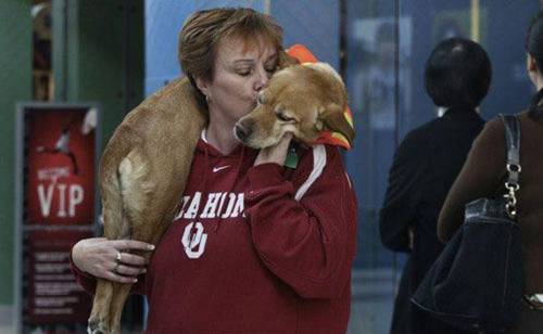 Faith - собака без передних лап, научилась ходить на двух задних лапах так, как это делает человек на двух ногах