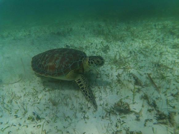 costa-maya-coral-reef-snorkeling (1)
