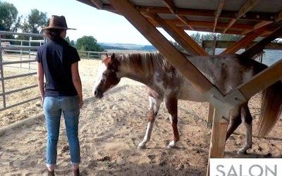 30 secondes pour découvrir le Développement personnel accompagné par le cheval