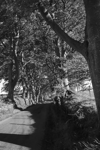 20110524-tree_covered_road_northumberland_2