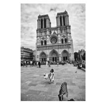 Paris France Notre Dame chevaugeon