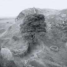 Hadrian_Tree_chevaugeon_(4_of_6)