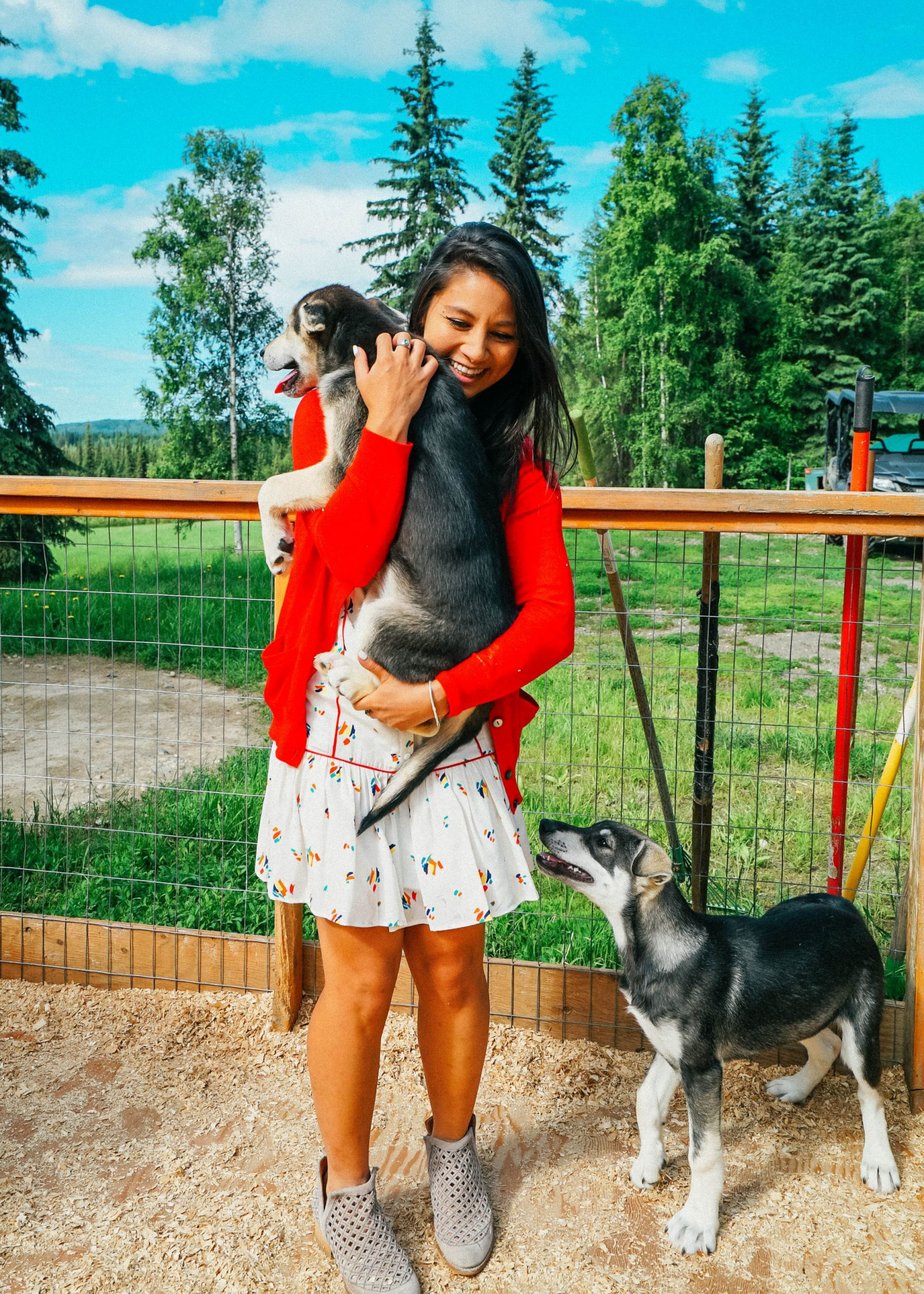 Playing with kennel dogs and puppies at Alaska's Paws For Adventure.