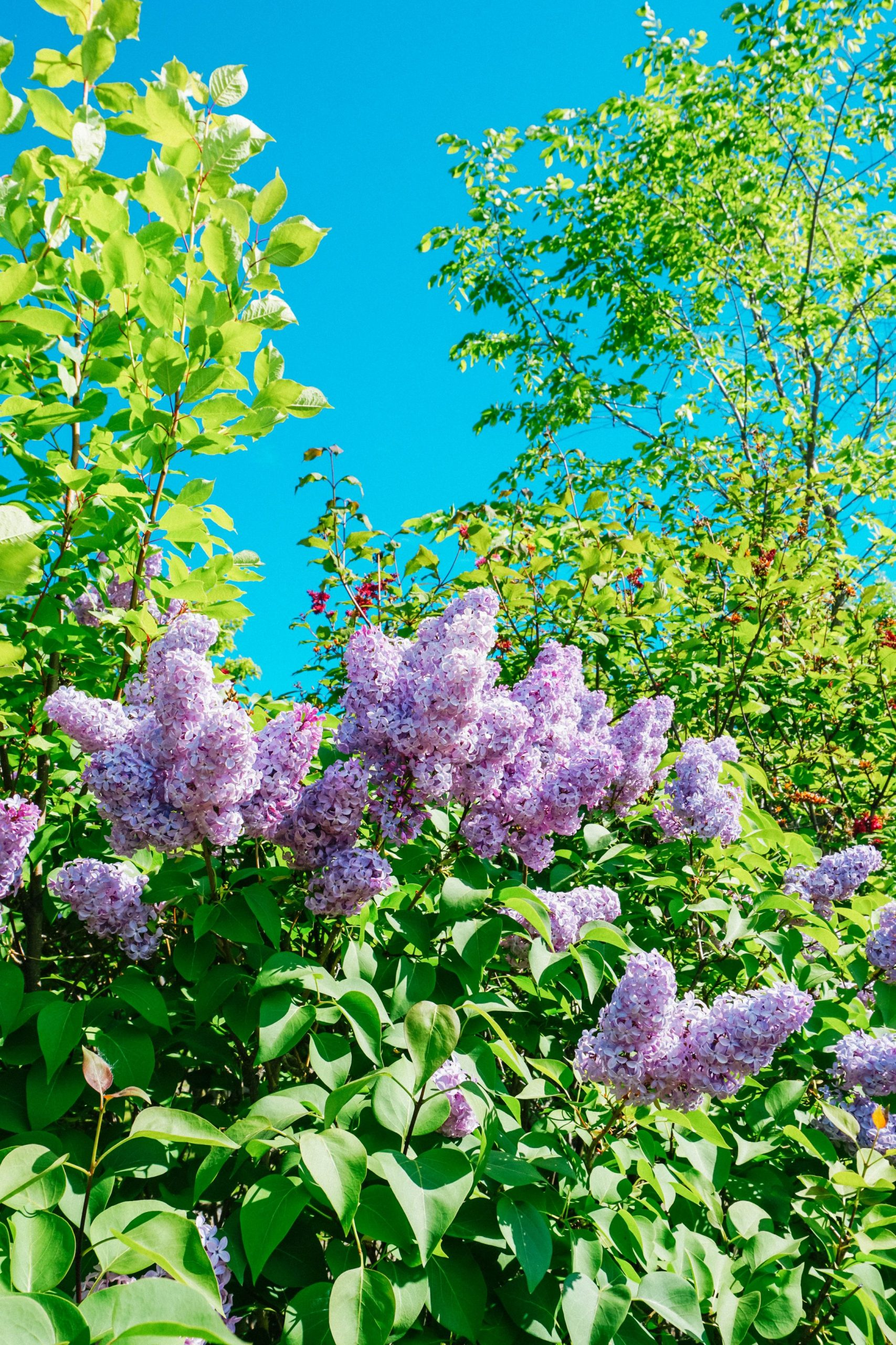 Enjoy blossoming flowers and plants at Georgeson Botanical Garden At University of Alaska.