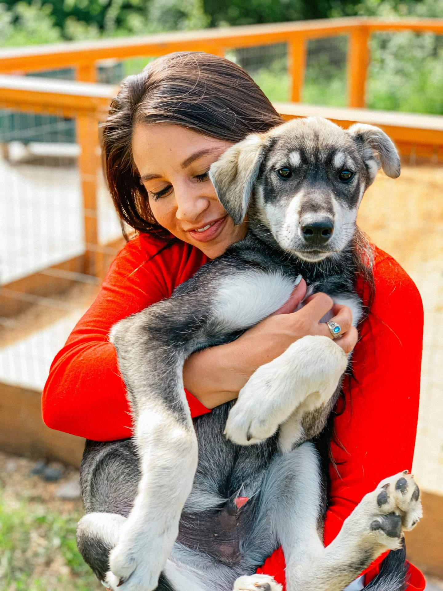 Cuddle with kennel dogs at Fairbanks, Alaska's Paws For Adventure.