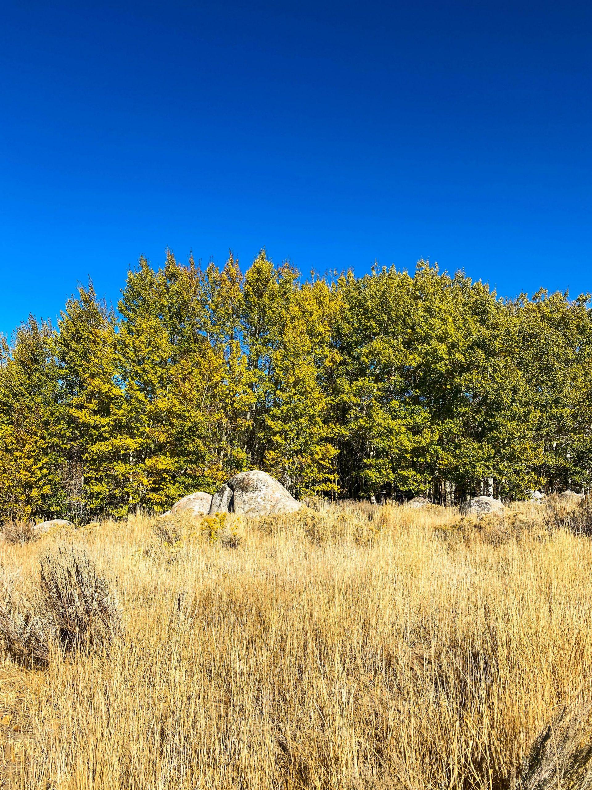 Rabe Meadow to Nevada Beach