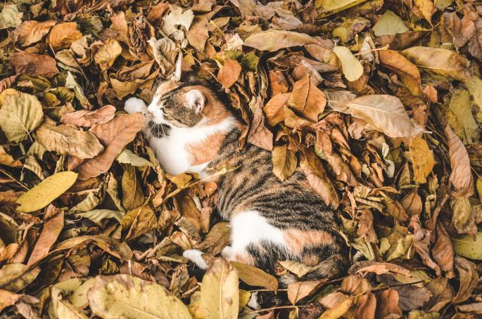 cat in the leaves for fall cleanup services www.cheyennehauling.com