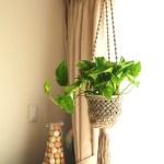 観葉植物, 室内グリーン化, ポトス