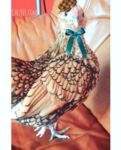 cuicui-poule-domestique-pet-chicken-appartement-sebright-france-chezfee-kawaii