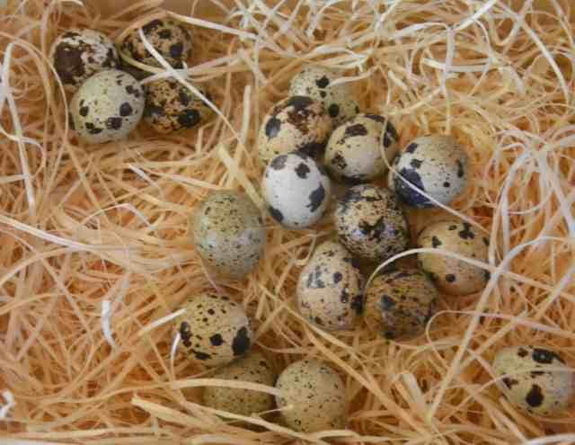 Quail Scotch Egg (2)