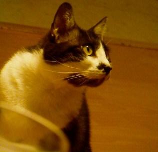 Gaby's Cat