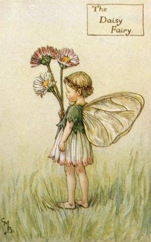 daisyfairy