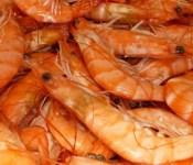calibre crevettes