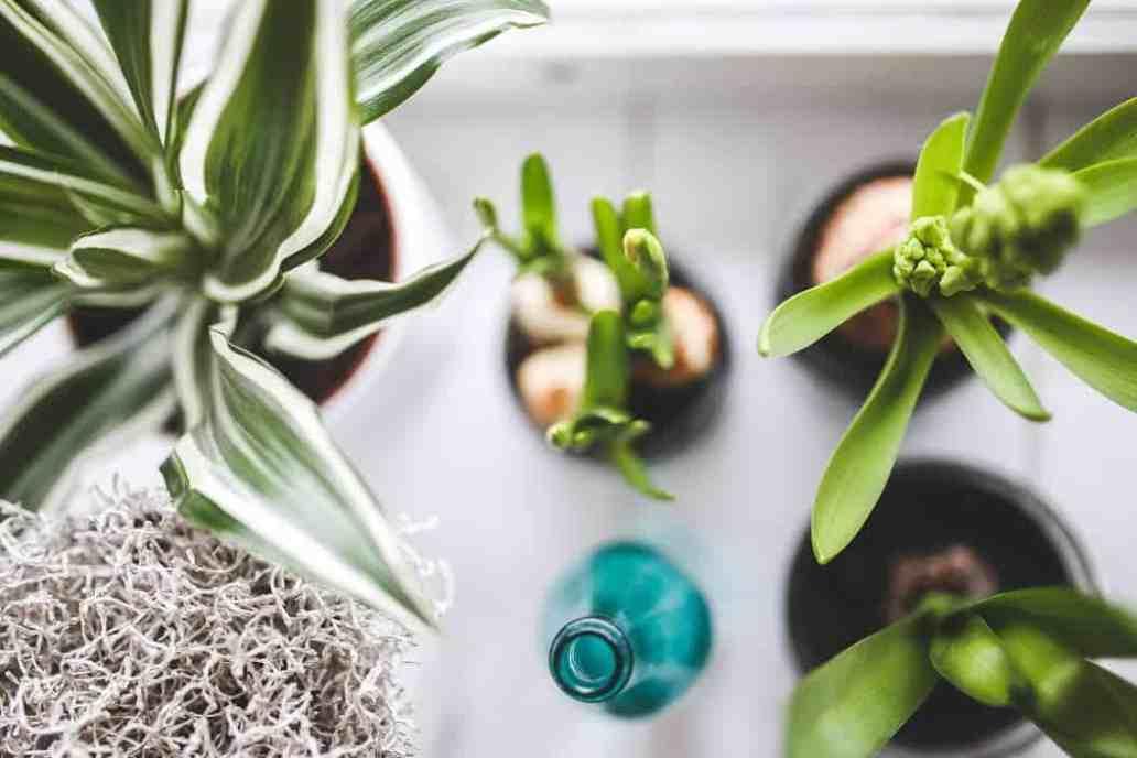 plantes grasses - Comment donner un coup de jeune à la déco