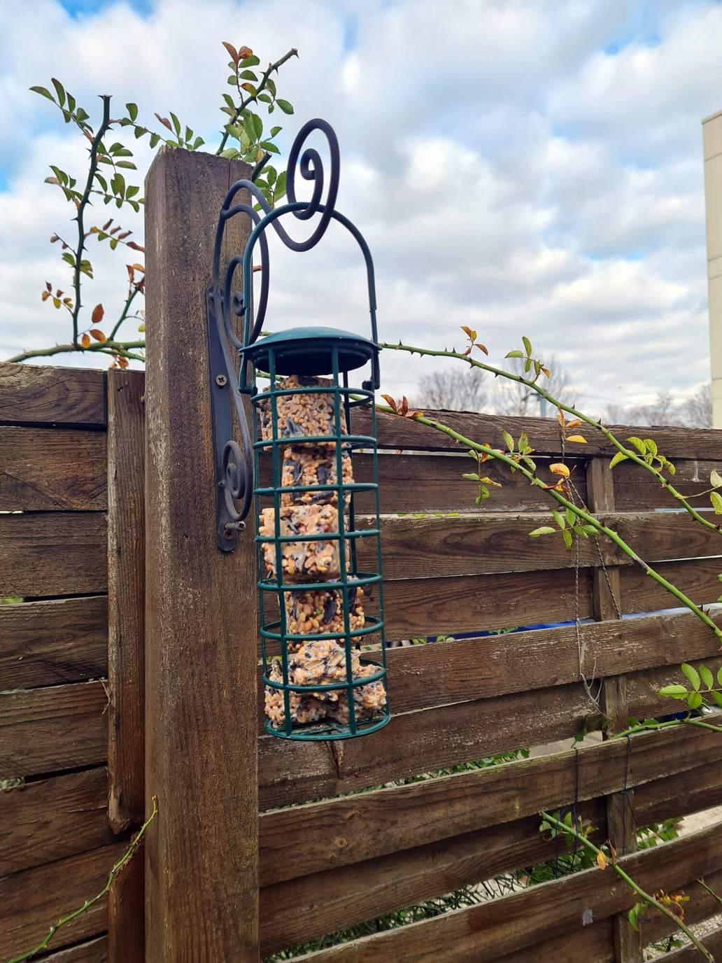 20210108 133517 - 3 DIY pour nourrir les oiseaux dans le jardin