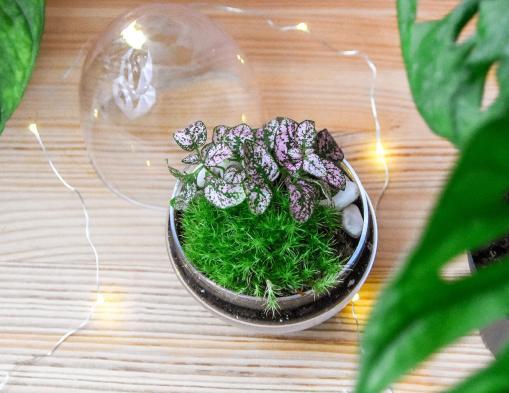 8 conseils pour maîtriser l'entretien du terrarium