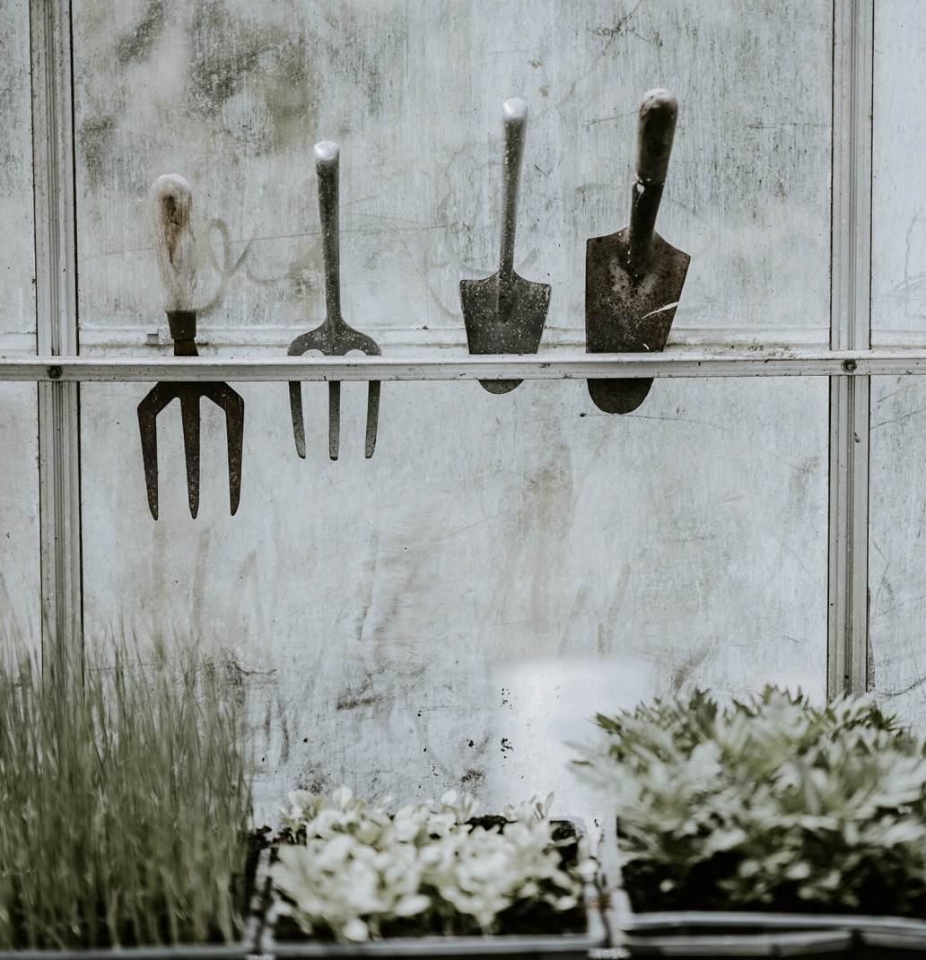 annie spratt q WvgGKONQI unsplash 2 - 8 conseils pour maîtriser l'entretien du terrarium