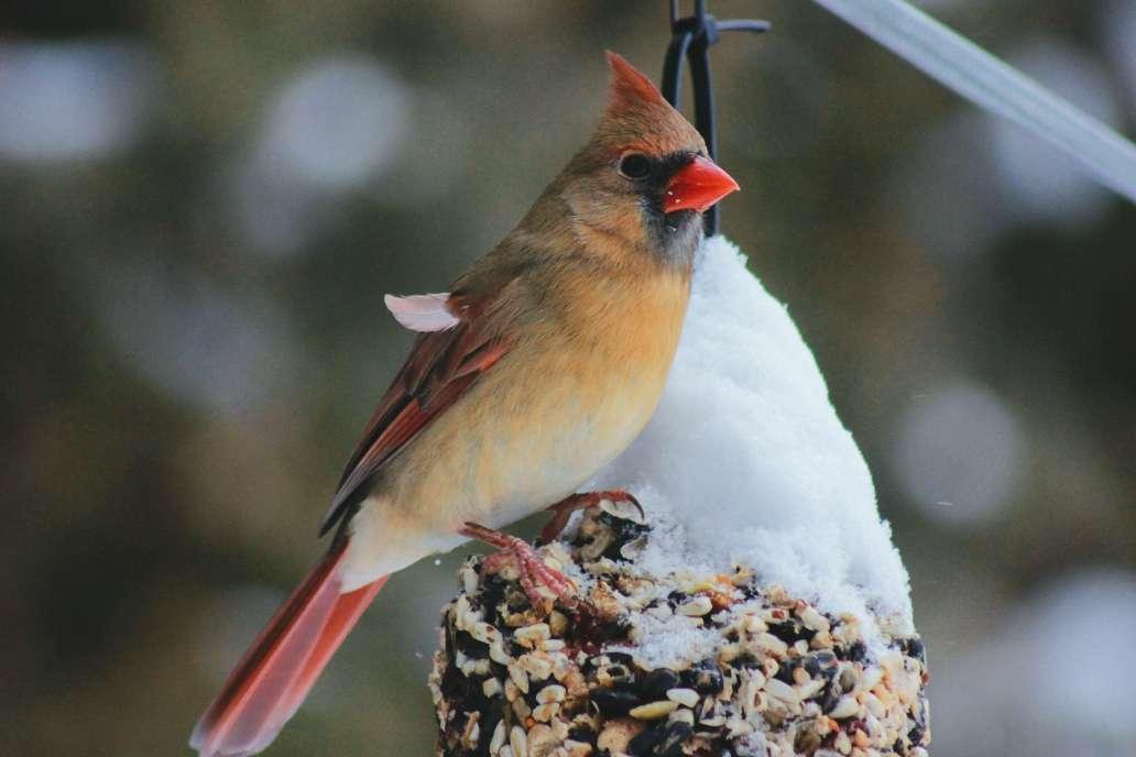 erin minuskin JRDbrrF 634 unsplash 2 2048x1365 - 3 DIY pour nourrir les oiseaux dans le jardin