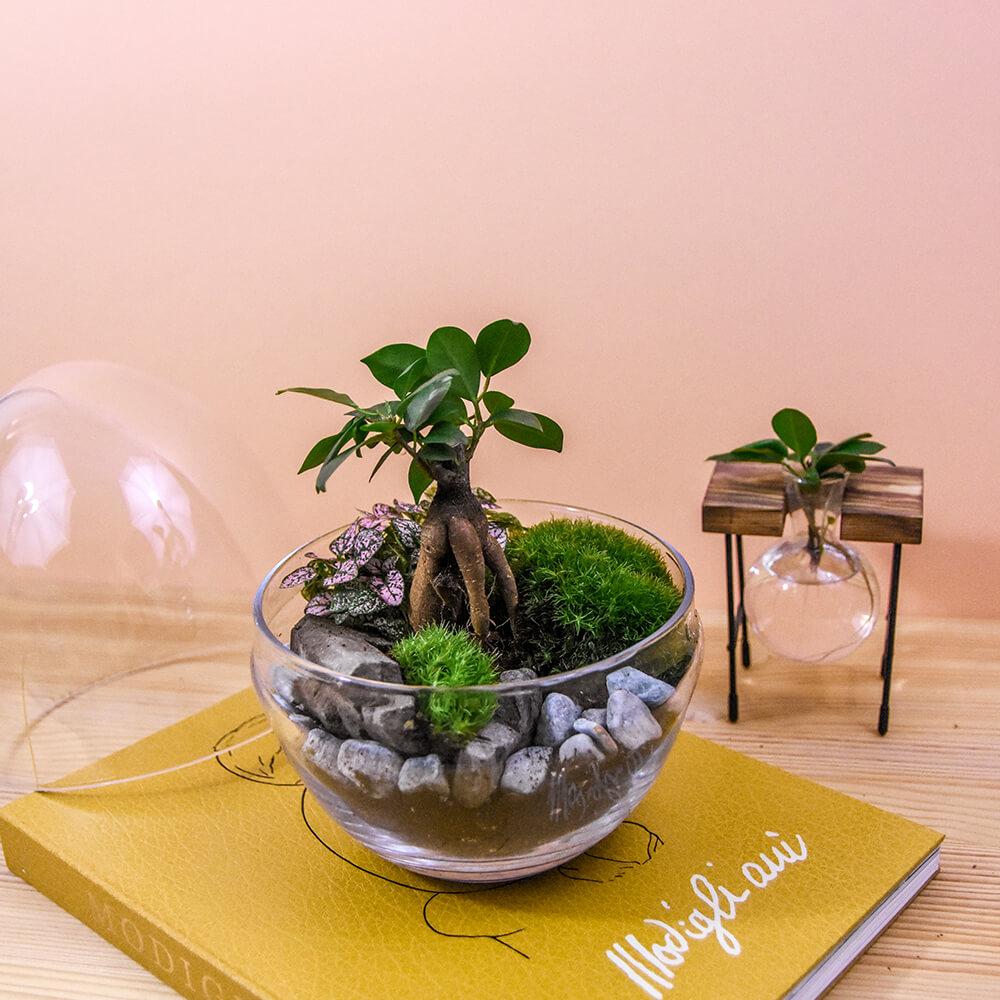 microcosmousse big egg 6 - 8 conseils pour maîtriser l'entretien du terrarium